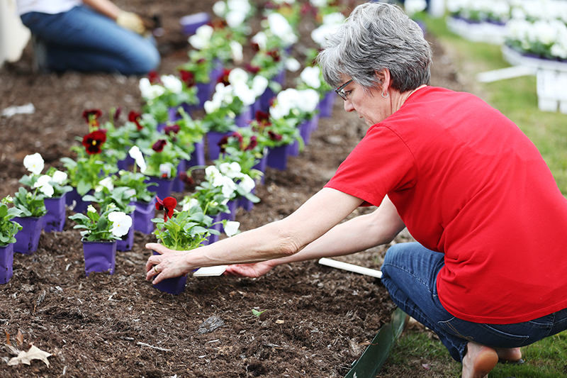 Gaye Christy works with fellow staff members to plant flowers at the West entrance of campus.